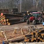 Sklad dřeva a řeziva.